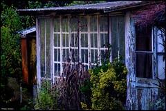 Saint Vincent du Lorouer (Sarthe) (gondardphilippe) Tags: saintvincentdulorouer sarthe maine paysdelaloire loir leloir nature jardin garden campagne rural ngc