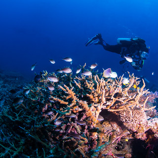 diver with staghorn coral (1 of 1)