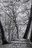 Fork (BlossomField) Tags: trees sassnitz mecklenburgvorpommern deutschland deu
