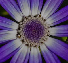 Flower macro (frankmh) Tags: flower macro sofiero helsingborg skåne sweden