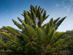 Fern Sky (Marcia H) Tags: 2017 australia sydney botanicalgarden sabbatical