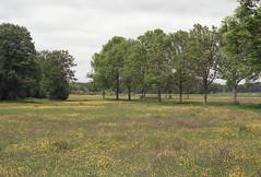 (turquoise monkey) Tags: canoneos300v canonef50mmf18 kodakgold hettwiske netherlands spring meadow