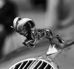 Dodge Ram Hood Ornament (Thad Zajdowicz) Tags: zajdowicz pasadena california usa travel canon eos 5d3 5dmarkiii dslr digital availablelight lightroom outside outdoors chalkfestival carshow ef24105mmf4lisusm street urban city hoodornament metal chrome ram dodge truck classic vintage blackandwhite black white bw bokeh light shadow vehicle car automobile transportation art macro animal square 1x1