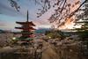 DionChapman-00984 (puggsincyberspace) Tags: mtfuji japan mountfuji snow sony sonya7rii sonya7r2 cherryblossom blossom
