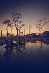 Reflections (Reginaldo Fonseca) Tags: reflection reflexo parqueburlemarx parque sjk sjc sjcampos trees sunset lake water mirroring mirror espelho espelhamento