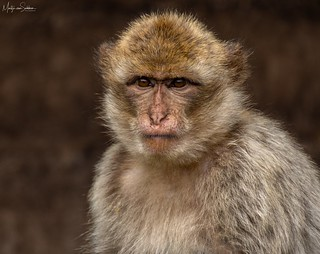 A not so happy monkey
