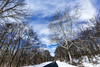 Prettyboy Winterscape [03.22.18] (Andrew H Wagner | AHWagner Photo) Tags: 5dmk3 5d3 5dmkiii 5dmarkiii 5dmark3 canon eos 1635l 1635mm f4 f4l is usm ultrawideangle wideangle winter snow snowy nature landscape md maryland prettyboy trees tree outdoors explore exploration exploring vanishingpoint road
