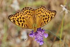 Butterfly (Hugo von Schreck) Tags: hugovonschreck butterfly schmetterling macro makro insect insekt canoneos5dsr tamron28300mmf3563divcpzda010 buzznbugz