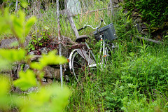 Almost overgrown... (Eric Flexyourhead) Tags: megijima 女木島 takamatsu takamatsushi 高松市 kagawa kagawaken kagawaprefecture 香川県 japan 日本 bike bicycle charinko チャリンコ jitensha 自転車 green sonyalphaa7 zeisssonnartfe55mmf18za zeiss 55mmf18