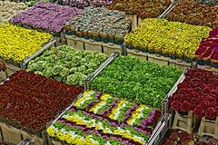 _MG_3642_DxO (carrolldeweese) Tags: aalsmeer flower auction market netherlands