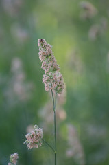 Wild Grasses (hmthelords) Tags: