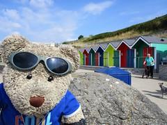 Barrybados! (pefkosmad) Tags: barryisland southwales wales dayout daytrip seaside ted teddy bear tedricstudmuffin animal toy cute cuddly soft stuffed plush fluffy