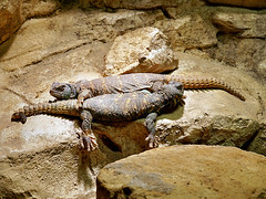Kuscheln (ingrid eulenfan) Tags: berlin zoo berlinerzoo tier animal echsen 69 kuscheln