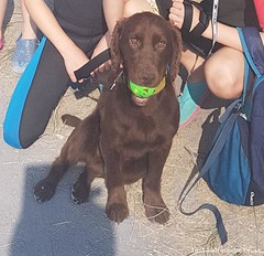 Thu, Jul 12th, 2018 Lost Male Dog - Kilmashogue Lane, Dun Laoghaire-rathdown, Dublin (Lost and Found Pets Ireland) Tags: lostdogkilmashoguelanedublin lost dog kilmashogue lane dublin july 2018