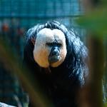Edinburgh Zoo thumbnail