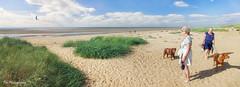 Hunstanton (Tor Photography) Tags: torphotography dog hunstanton oldhunstanton norfolk beach sand sea coast pentaxk200d pentax summer englishsetter setter dunes labrador sanddunes seaside england uk britain ocean
