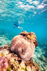 Underwater Heron Island-5 (Quick Shot Photos) Tags: australia canon canoncollective greatbarrierreef heronisland queensland underwater bogie au
