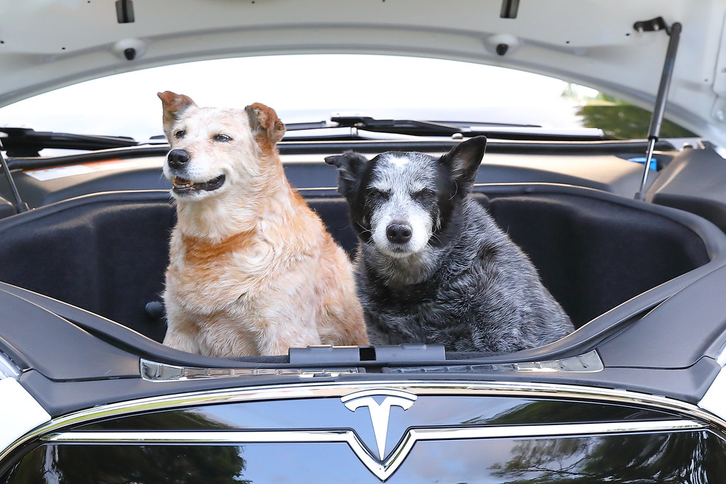 The World's Best Photos of frunk and tesla - Flickr Hive Mind