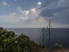 Visions de camí de ronda... (Gelsauc) Tags: caminsderonda paisatge palamós platjadelafosca costabrava landscape sea catalunya repúblicacatalana
