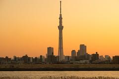 Skytree|晴空塔 (里卡豆) Tags: katsushikaku tōkyōto 日本 jp sumidaku olympus penf 45mm f12 pro olympus45mmf12pro