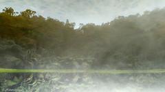 Upsidedown reflection (Naturescrack) Tags: itagüí antioquia colombia co nature naturaleza green verde landscape paisaje landscapes paisajes water agua lake lago laguna lagoon sky cielo nube nubes cloud clouds reflejo reflection reflections reflejos espejo mirror tree trees arbol arboles árbol árboles asus
