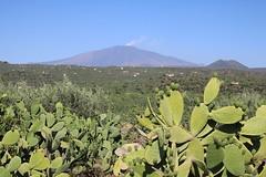 Blick über Kakteen und Pistazienplantagen zum Etna (Helgoland01) Tags: sicilia sizilien italia italien etna ätna vulkan