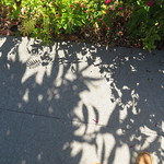 toe & shadows 7 17 18 thumbnail