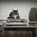Not today (Jenny!) Tags: cat records vinyl recordplayer athome