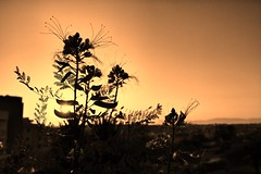 Before Sunset (15) (Polis Poliviou) Tags: nicosia lefkosia street summer capital life live polispoliviou polis poliviou πολυσ πολυβιου cyprus cyprustheallyearroundisland cyprusinyourheart yearroundisland zypern republicofcyprus κύπροσ cipro кипър chypre chipir chipre кіпр kipras ciprus cypr кипар cypern kypr ©polispoliviou2018 streetphotos europe building streetphotography urbanphotography urban heritage people mediterranean roads afternoon architecture buildings 2018 city town travel naturephotography naturephotos urbanphotos neighborhood
