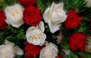 Blumen, Blüten - flowers and blossoms, serie, Rosenstrauß, 76327/10267