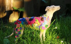 flowerbomb galgo 027 (adore62) Tags: flowerbombgalgo feltedfido felteddog needlefelteddog needlefelted embroidered embroidery flowerbomb
