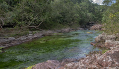 The green section of Cano cristales - colored by green waterplants (Hannes Rada) Tags: colombia lamacarena canocristales river green waterplants