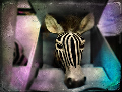 Out of Africa (drei88) Tags: transcend emotion fleeting energy sadness charged light shadow color hue saturation distressed imagination distraction groceryshopping life death living love moment dreary lifeless zebra trophy iphone spontaneous passion