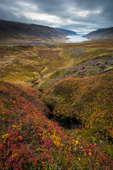 Breiðidalur and Kvígindisfjörður #3, Westfjords, Iceland (Fabien Guittard) Tags: myrtille voyage paysage nature ruisseau automne mousse nuages végétal fjord arbrisseau clouds fall landscape travel vegetal bilberry bush moss shrub stream vacciniummyrtillus vestfirðir islande is