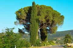A-LUR_6407 (OrNeSsInA) Tags: panicale paciano trasimeno umbria italia italy natura panorami landescape