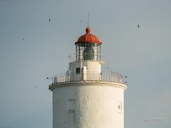 _DSC3483.jpg (fotolasse) Tags: sonyölandormvråkfåglar öland natur kalmar ottenby långejan fyr canon sony bird birds fåglar vatten hav water sea sweden sverige