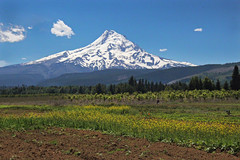Mount Hood (skipmoore) Tags: mounthood hoodrivervalley volcanic peak mountain fields