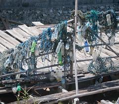 DSC_0373 (yakovina) Tags: silverseaexpeditions indonesia den weg island papua new guinea