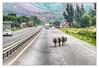 Traffic on the route NR1A - Quốc lộ 1Quốc lộ 1A (Daniel Mennerich) Tags: quốclộ1a vietnam ql1a