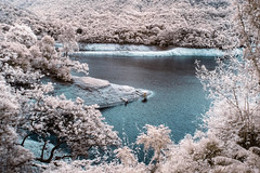 Fish (_hojim) Tags: explore hongkong reservior water fish nature trees landscape waterscape abstract infrared ir sony mod a33 blue leaves silent calm