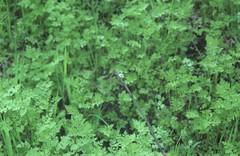 Snail (sztomy_analog) Tags: 35mm 35mmfilm 35mmfilmphotography film filmsnotdead filmisnotdead filmphotography explorewithfilm ishootfilm analog analogphotography photography magyaranalog magyar hungarian sztomy art sztomyphoto fujieternavivid250d fujieterna250d vivid eterna
