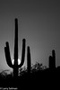 Tribute to Arizona Highways (selmanphotos) Tags: family tucson saguaronatonalpark az
