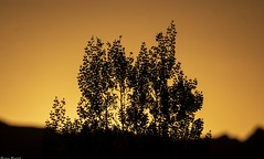 53 (Jerseket) Tags: canont3i canon photoshop sigma sigmalens valle grande san rafael mendoza argentina starparty ocaso atardecer sunset sun sol solar puesta paisaje landscape