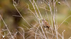bird 2 (Cathaus Photography) Tags: cathaus nikon cheney spokane lichen moss tree wood