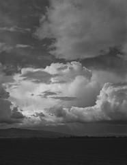 central california on 4x5 film (Garrett Meyers) Tags: rbgraflex4x5 garrettmeyers garrett meyers largeformat 4x5film 4x5 film filmphotographer farmland blackandwhitefilm clouds cloudscape crops farms rain rainclouds stormclouds storm wind graflex homedeveloped northerncalifornia central
