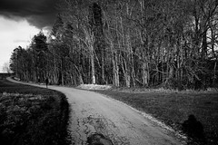 Before rain (stefankamert) Tags: stefankamert clouds forest trees way people blackandwhite blackwhite noiretblanc noir sun shadow sony rx1 rx1r fullframe mirrorless landscape 35mm zeiss