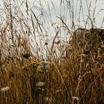 Bretagne (49 of 171) thumbnail