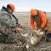 Use of Skinning Knife starts after the deer is hunt down
