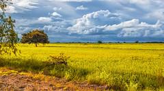 Landscape (Isai Hernandez) Tags: landscape paisaje tarde tree afternoon nature nikon