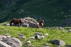 Cirque de Gérac (Ariège) (PierreG_09) Tags: cheval transhumance estive troupeau faune animal ariège pyrénées pirineos couserans montagne